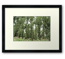 Willow forest Framed Print