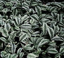Leaves - Kew Gardens, London by MaggieGrace