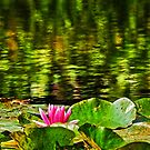 Water Lilies by Aleksandar Topalovic
