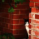 The Cat Sees All by Janet Rymal