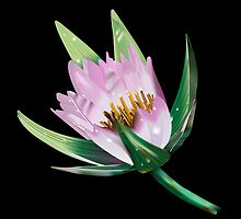 American Lotus Flower-Vector by Paul Wolf