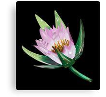 American Lotus Flower-Vector Canvas Print
