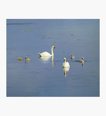 The Progress Of The Swan Family Photographic Print