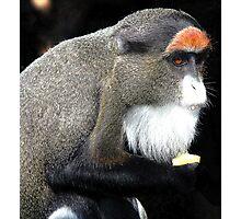 De Brazza's monkey(Cercopithecus neglectus) Photographic Print