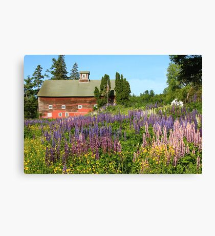 Wildflower Field and Red Barn   Canvas Print