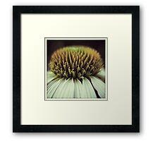 Echinacea Flower Macro Framed Print