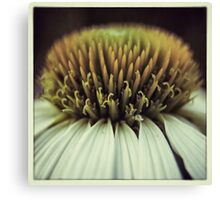Echinacea Flower Macro Canvas Print