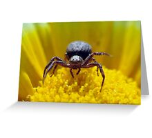 Xysticus cristatus Greeting Card