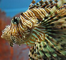tiger fish by heartoftheocean