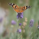 Painted Lady Butterfly by Jean Martin