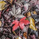 Autumn Leaves by Graham Prentice
