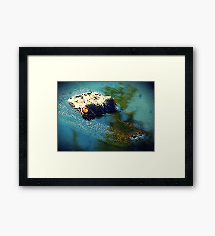 Lurking Gator Framed Print