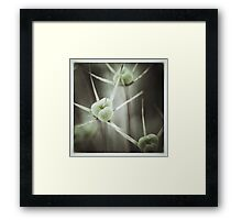 Allium Seed Heads Framed Print