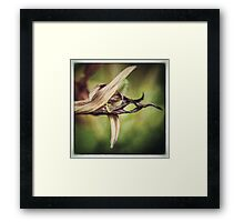 Hemerocallis Flower Framed Print
