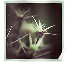 Allium Seed Heads Poster