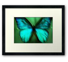 Butterfly Sample Framed Print