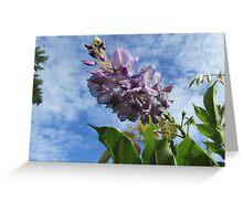Unusual wisteria blooms in August Greeting Card