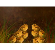 Ten Sparrow's sitting in a Field. Photographic Print