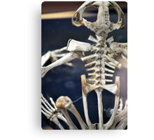 Frog Skeleton Canvas Print