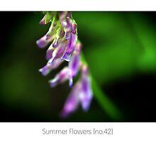 Summer Flowers [no.42] by Solomon Walker