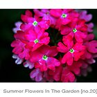 Summer Flowers In The Garden [no.20] by Solomon Walker