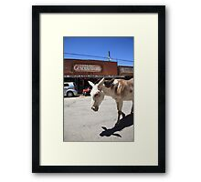 Route 66 - Oatman Arizona Framed Print