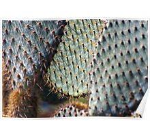 Giant Opuntia Cactus Poster