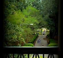 The View Out Back Of Oak Alley Plantation From 2nd Floor by anitahiltz