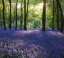 Sunlight in the Bluebell Woods by Photokes