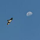 Osprey moon. by traveller