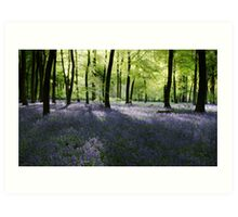 Spring Woodlands Art Print