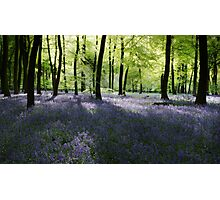 Spring Woodlands Photographic Print