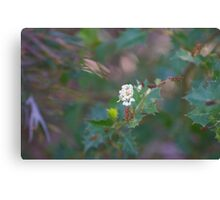 Native flower 6 Canvas Print