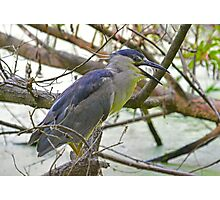 Black Capped Night Heron Says Hello Photographic Print