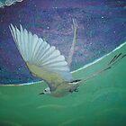 Flycatcher  by Edmund J. Gray