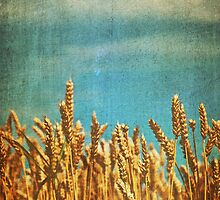 Soft Winds Shake The Barley by Denise Abé