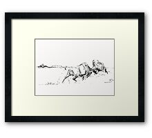 Bison Buffalo Charging Framed Print