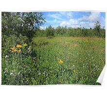 Meadow with purple and yellow wildflowers Poster