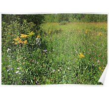 Colorful wildflowers Poster