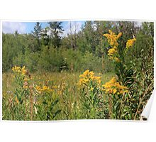 Summer bouqet of yellow wildflowers Poster