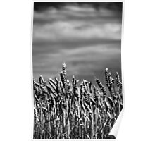 Soft Winds Shake The Barley (mono) Poster