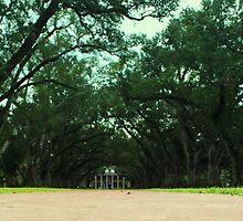 Tree Lined Path Of Oak Alley Plantation In Louisiana by anitahiltz