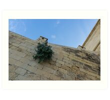 Life on Bare Rock - Up on the Citadel Wall in Victoria, Gozo Art Print