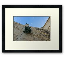 Life on Bare Rock - Up on the Citadel Wall in Victoria, Gozo Framed Print