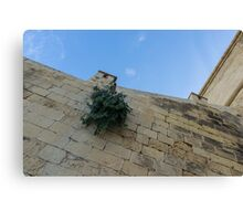 Life on Bare Rock - Up on the Citadel Wall in Victoria, Gozo Canvas Print