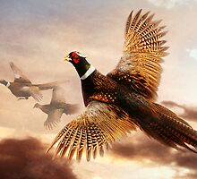 Pheasants in Flight by Norman Rawn
