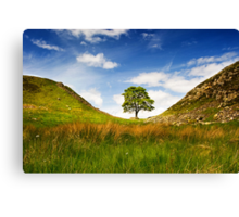 Sycamore Gap on Hadrian's Wall Canvas Print