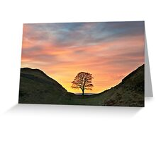 Sycamore Tree on Hadrian's Wall Greeting Card