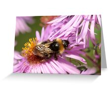 Bee on a flower 2 Greeting Card