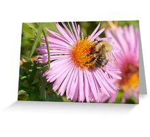 Bee on a flower 3 Greeting Card